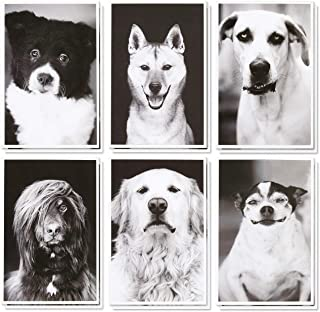 36 Pack Blank Note Cards Bulk Box Set - Assorted All Occasion Real Photograph Rescue Dogs - White Paper Envelopes Included 4 x 6 Inches