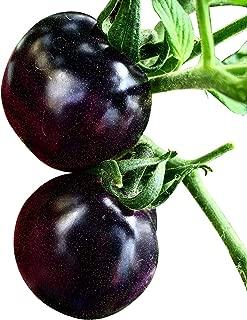 Souked De alta calidad de 20 semillas Purple Tomate Cherry Fruit Orgánica Vegetal Vegetal