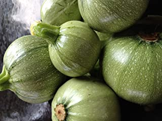 French Ronde de Nice Heirloom Zucchini by Stonysoil Seed Comany