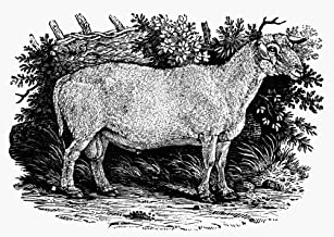 Posterazzi Poster Print Collection Sheep Nteeswater Old Or Unimproved Breed. Wood Engraving English C1800, (24 x 36), Multicolored