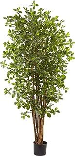 Best black olive tree for sale Reviews