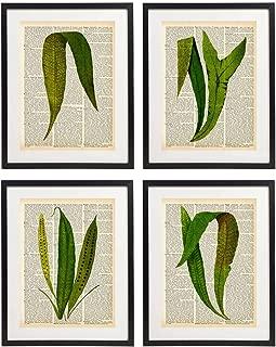 IDIOPIX Fern Art Prints Vintage Botanical Wall Art Set of 4 Prints UNFRAMED No.2