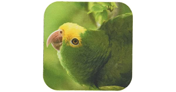 3dRose cst/_85626/_2 Yellow-headed  Parrot Tropical bird Belize Set of 8 Soft Coasters SA02 POX0118 Pete Oxford