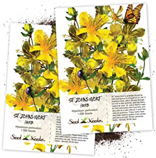 Seed Needs, St. Johns Wort Herb (Hypericum perforatum) Twin Pack of 1,000 Seeds Each Non-GMO