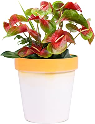 Sharpex Traditional Type Flower Pot (Orange)