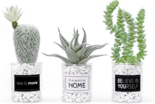 codagraph - Set of 3 Artificial Succulent Plants Potted in Glass Vases - Fake Cactus Plant for Home Accent Décor