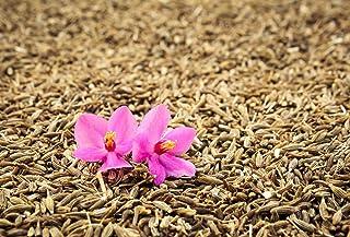 Cumin Seeds for Growing The Heirloom East Indian Ethnic Herb bin153 Bin153 (250 Seeds)