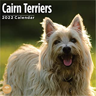 2022 Cairn Terriers Wall Calendar by Bright Day, 12 x 12 Inch, Cute Dog Puppy