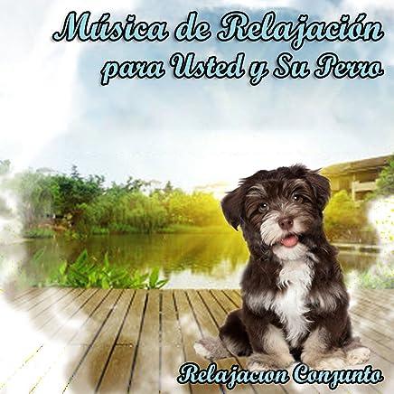 Música de Relajación para Usted y Su Perro