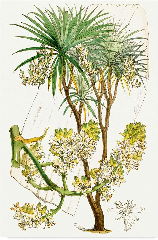 Trademark Fine Art Palms VI by Curtis, 12x19