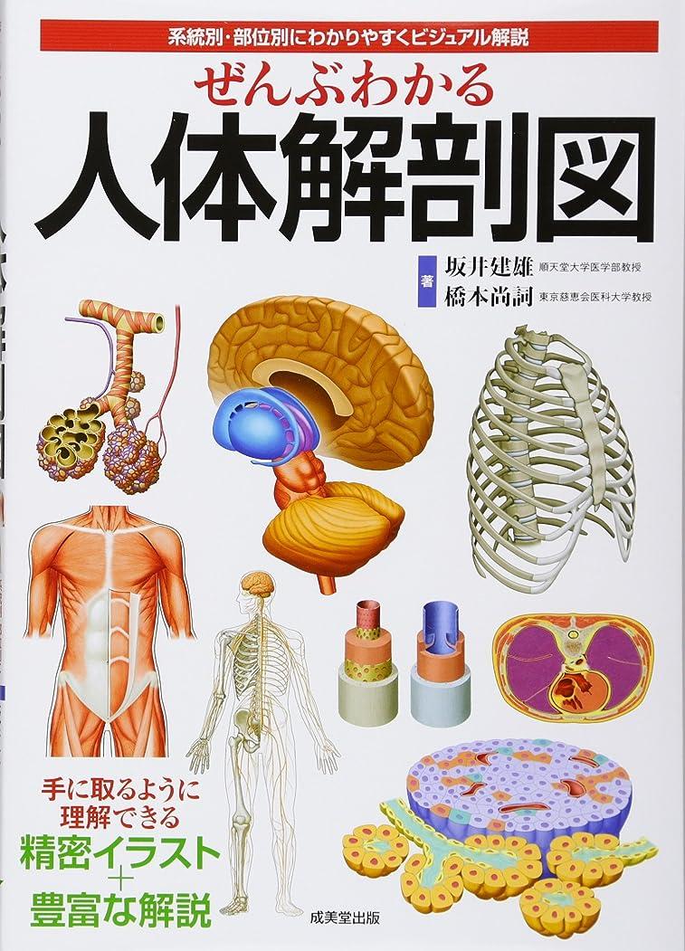 店員モンゴメリー安価なぜんぶわかる人体解剖図―系統別?部位別にわかりやすくビジュアル解説