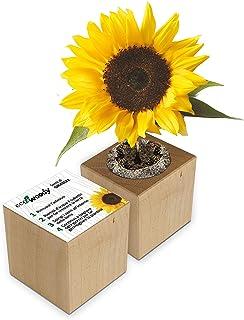 Eco-Woody | Regalo ecologico e sostenibile | Cubo di legno magnetico con semi di Girasole | Kit per la coltivazione facile...