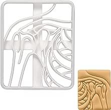 Shoulder X-Ray cookie cutter, 1 piece - Bakerlogy