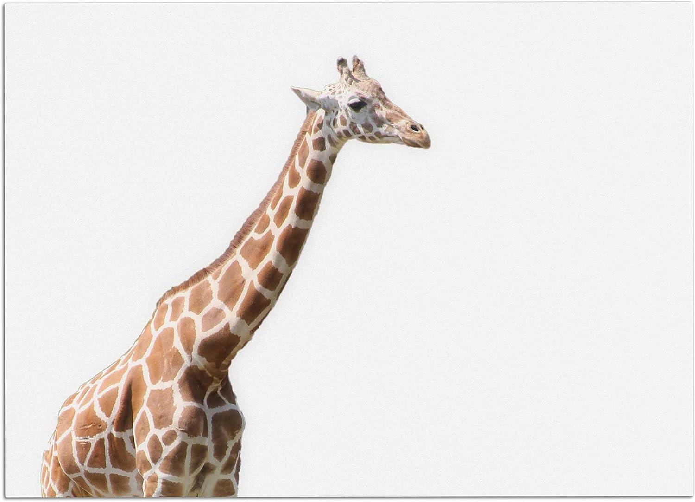 KESS InHouse SC4032ADM02 Sylvia Coomes Giraffe Animals Photography Dog Place Mat, 24  x 15