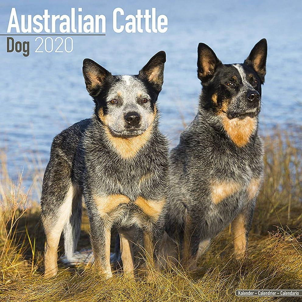 Australian Cattle Dog Calendar - Dog Breed Calendars - 2019 - 2020 Wall Calendars - 16 Month by Avonside (Multilingual Edition)