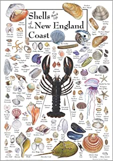 Earth Sky & Water Poster - Shells of The New England Coast