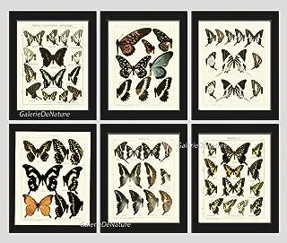 vintage butterfly art