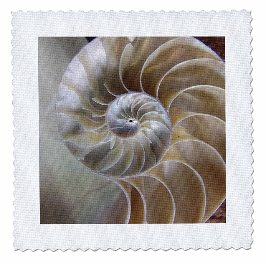 3dRose qs_7487_8 Nautilus Shell-Quilt Square, 20 by 20-Inch