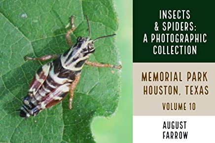 Insects & Arachnids: A Photographic Collection: Memorial Park: Houston Texas - Volume 10 (Arthropods of Memorial Park) (English Edition)