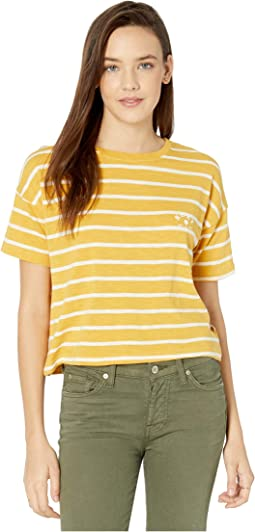 Honey Gold Basic Stripes