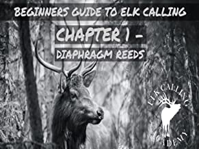 cow elk calling video