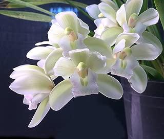 Best ice cascade plant Reviews