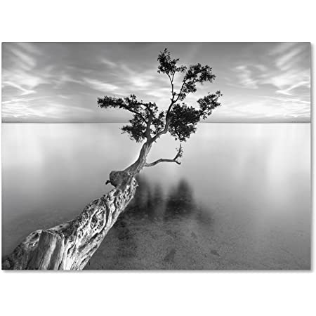 Amazon Com Water Tree Xiii By Moises Levy 16 By 24 Inch Canvas Wall Art Prints Posters Prints