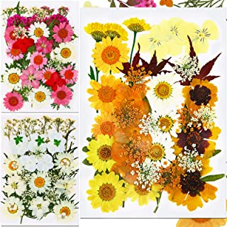 Sponsored Ad - 110 Pieces Natural Dried Flowers Mixed Real Dried Flowers Assorted Colorful Hydrangea Daisies Leaves Multip...