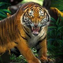 Wild Tiger Safari Hunting 2018