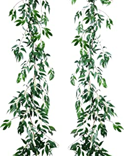 Best big leaf outdoor plants Reviews