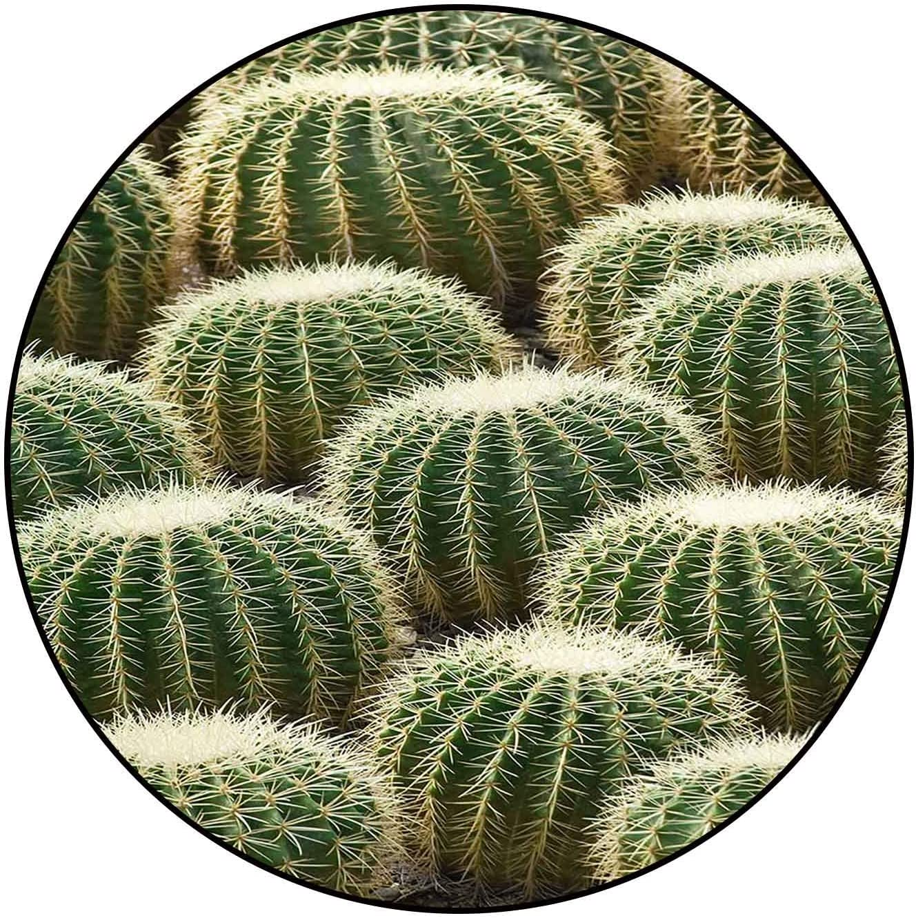 Great interest Classic Pattern Round Rug Don't miss the campaign Lots Non-Sk Washable Cactus 9417241 of