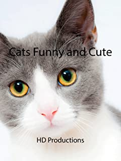 Clip: Cats Funny and Cute