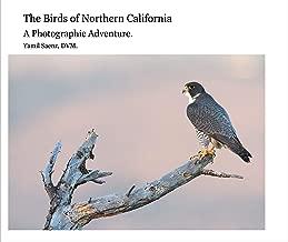 Best northern eagle bird Reviews