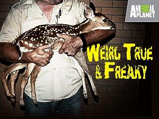Weird True and Freaky Season 2