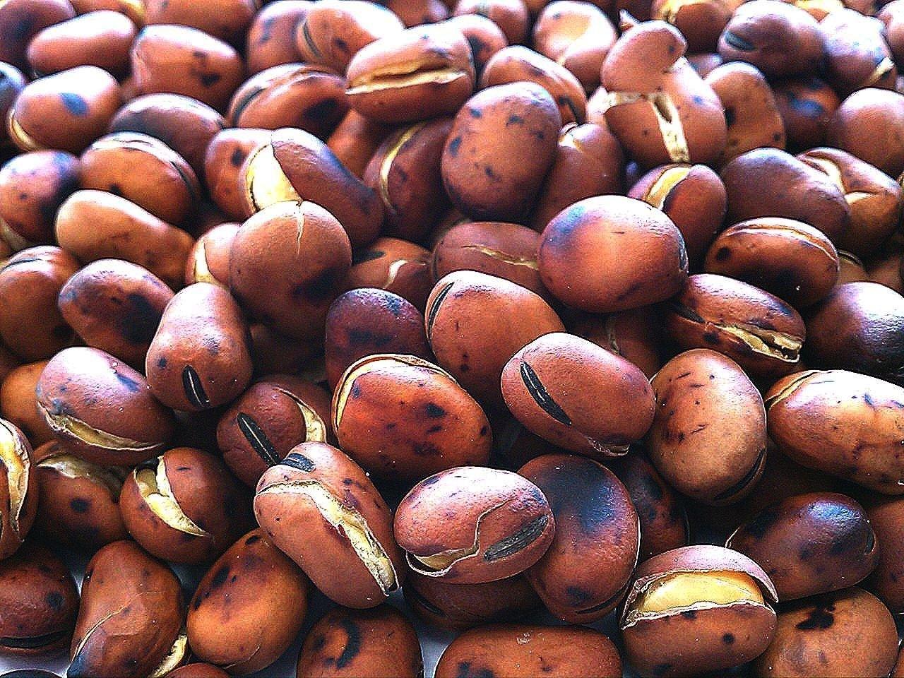 Kuroda-ya repelling beans 1000g wholesale Kyushu Ranking TOP5 factory manufactured good