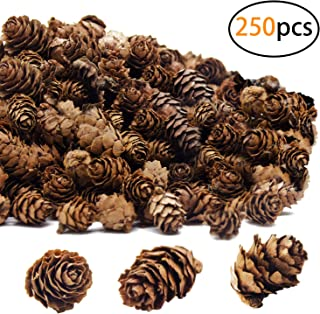 Deloky 250 PCS Christmas Natural Mini Pine Cones-Thanksgiving Pinecones Ornaments for DIY Crafts, Home Decorations,Fall and Christmas,Wedding Decor