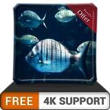 free rush aquarium HD: multitud de peces grandes en el acuario en su televisor HDR 4K, televisor 8K y dispositivos de fuego como fondo de pantalla, decoración para las vacaciones de Navidad, tema para
