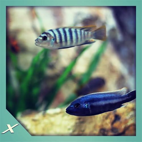 Fish Tank HD - Fish Tank for Fire TV