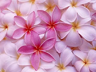 Hawaiian Pink Plumeria Plant Cutting ~ Grow Hawaii