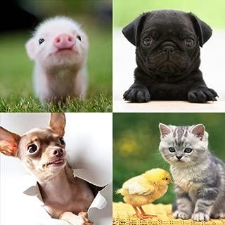 Cute Animals Puzzle Game
