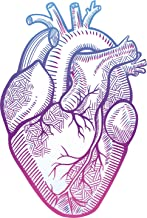 Best anatomical drawing heart Reviews