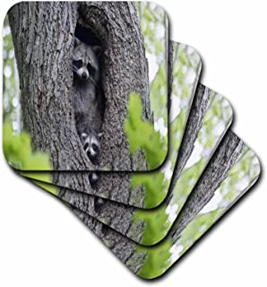 3dRose Racoons Hiding in A Tree Trunk - Soft Coasters, Set of 4 (CST_80742_1)