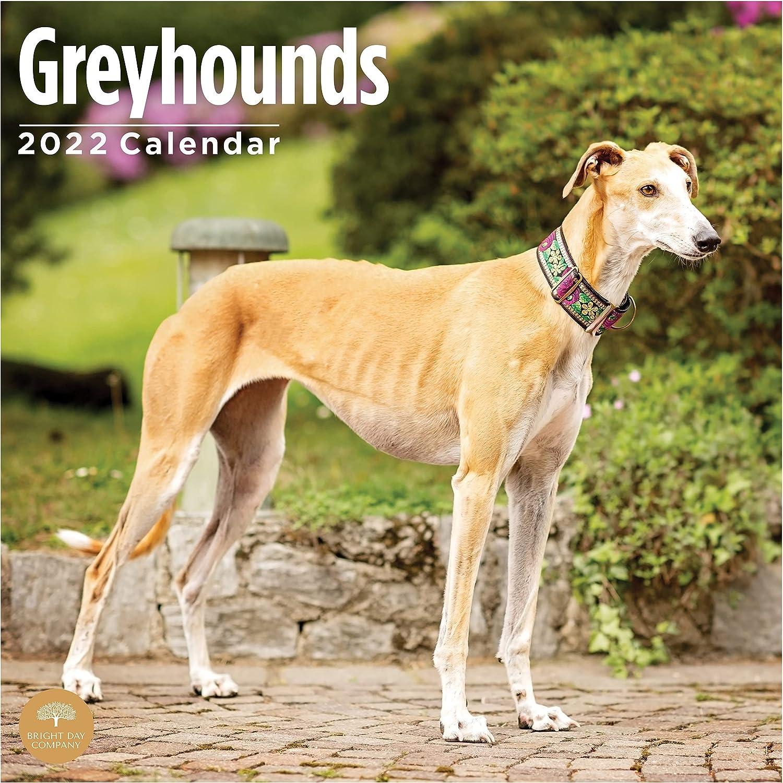 2022 5 popular Fashion Greyhounds Wall Calendar by Bright Cute Day x 12 Inch