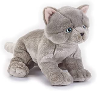 Lelly - National Geographic British Shorthair Kitten, Sitting