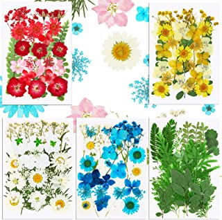 153 Pieces Natural Dried Flowers Mixed Pressed Flowers Assorted Colorful Dry Flower Leaves Multiple Daisies Dried Flower, ...