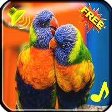 Bird Ringtones Free app