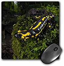 3dRose Fire Salamander lizard, Switzerland - EU29 AMR0006 - Andres Morya Hinojosa, Mouse Pad, 20cm by 20cm