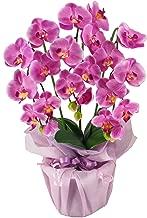 神戸花物語(Kobe Flower Story) 胡蝶蘭 cotyoran-mini-dl 本体: 高さ43cm 本体: 幅28cm