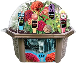 Toys By Nature Create Your Own Zombie Apocalypse - Complete Kids Terrarium Kit to Grow Plants That Look Like Real Brains and Eyeballs - Includes Everything Needed to Start Your House of Horrors