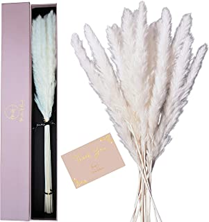 """MAKE IT HAUTE 24"""" Natural Dried Pampas Grass – 30 pcs Ivory White Pampas Arrangement Protected By Elegant Box – 2ft Tall D..."""